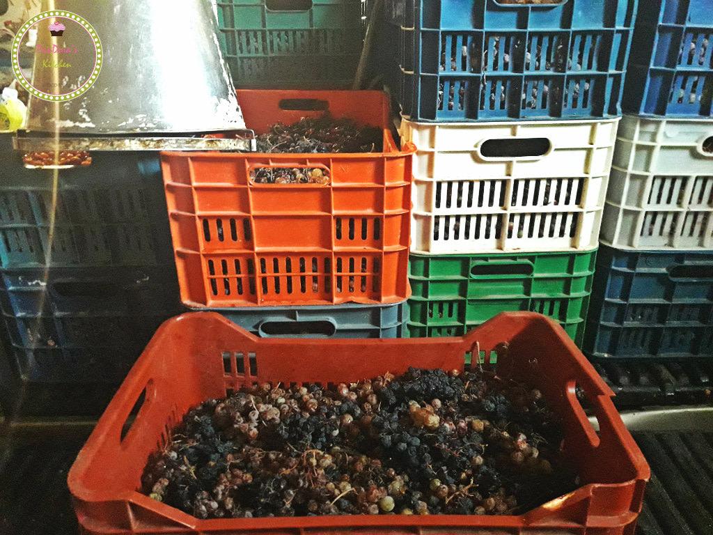 σταφύλια-τρύγος-μούστος-κρασί-χιος-πατητήρι